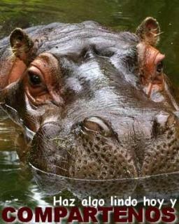 Los hipopotamos pueden comer carne?