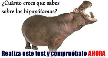 Hipopotamos de Pablo Escobar deambulan por calles de Puerto ...